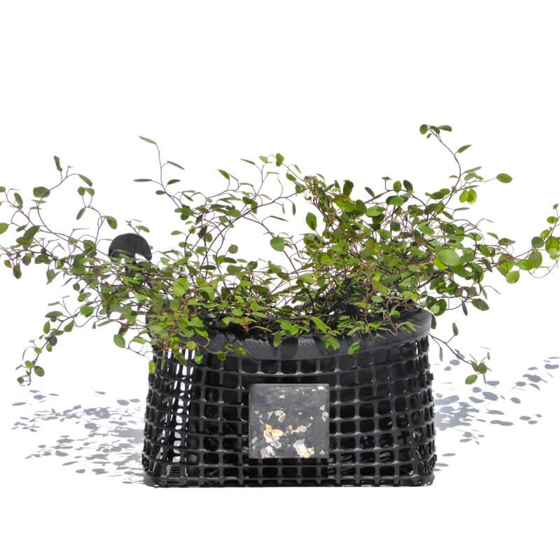 corbeille io par maille darling avec plantes