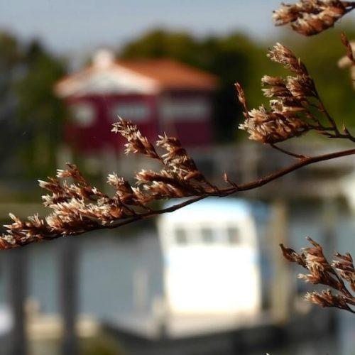 port de la cayenne à marennes atelier maille darling